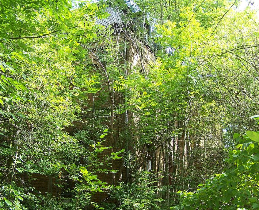 Wildwuchs im Wald als Symbol für Wildwuchs im Wiki
